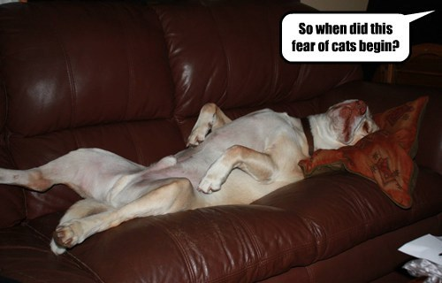 shrink fear couch Cats funny - 7672945664
