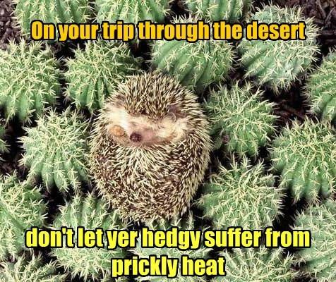 Heat desert travel advisory cactus hedgehog funny - 7673071616
