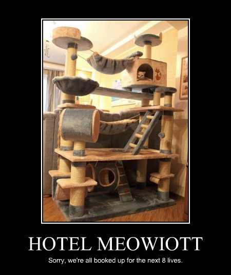 HOTEL MEOWIOTT Sorry, we're all booked up for the next 8 lives.