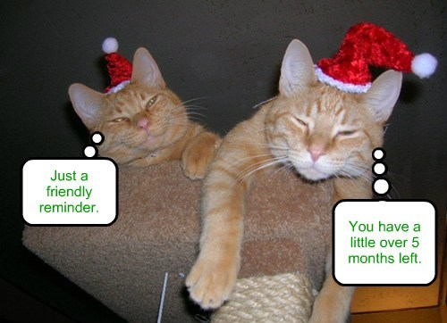christmas hats holiday funny - 7673158144