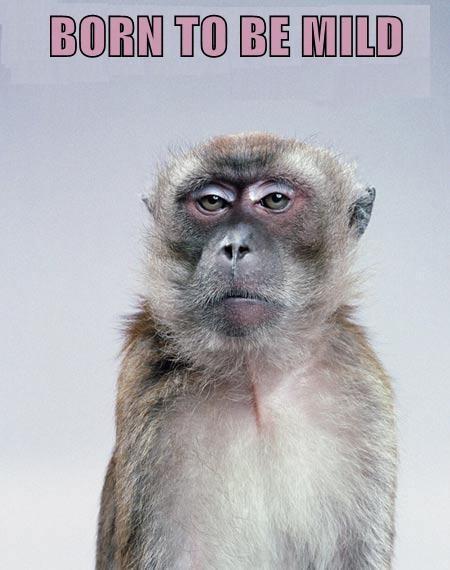 monkey - 7673456896