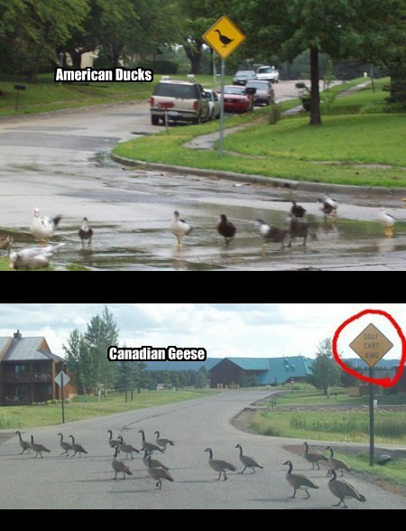 Canada signs critters canadian geese funny - 7673575424