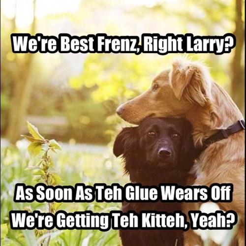 glue best friends funnny Cats - 7673655808
