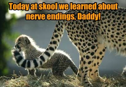 Today at skool we learned about nerve endings, Daddy!