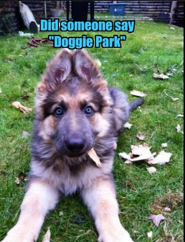 "Did someone say ""Doggie Park"""