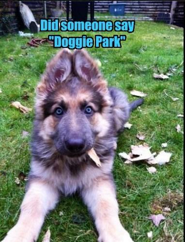 dog park cute happy - 7674584576
