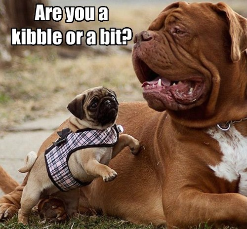 kibbles and bits glasses funny - 7674959360