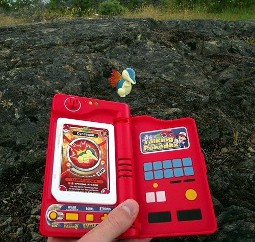 pokedex,Pokémon,cyndaquil,IRL