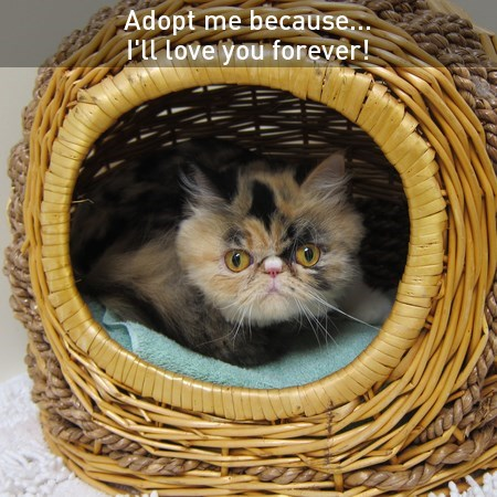 do something furby adoptable Cats - 7675339264