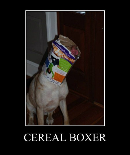 pun box prize funny cereal - 7675566592