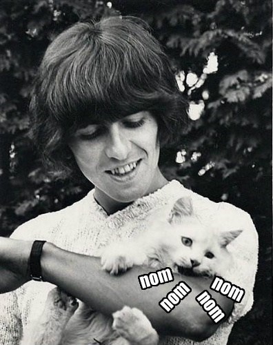 cat beatles george harrison - 7676816384