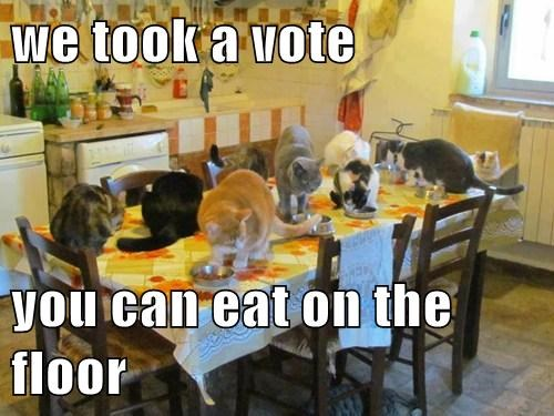 floor vote table food eating - 7677042944