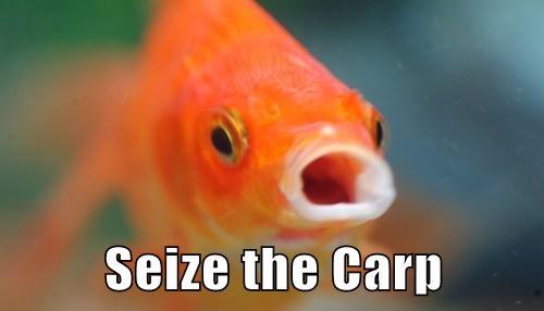 goldfish - 7677102848