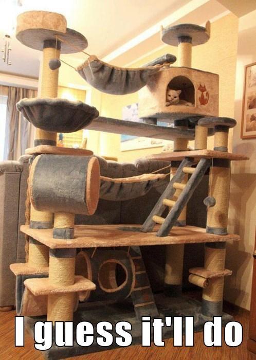 cat ungrateful funny - 7677252608