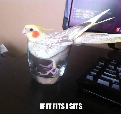 if i fits i sits glass bird funny - 7677431296