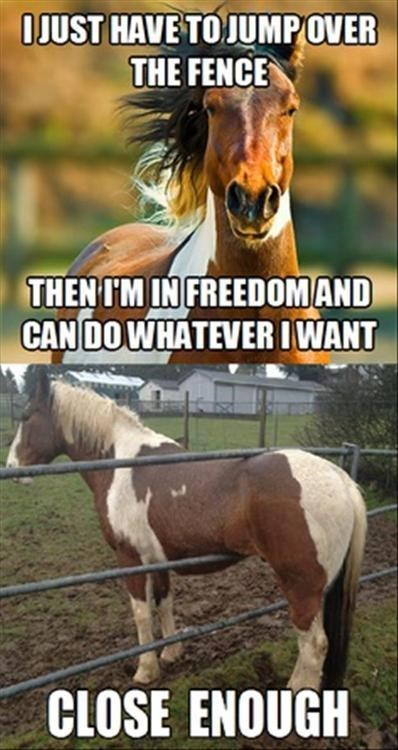freedom jump fence stuck funny horse - 7677431808
