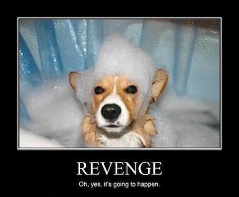 revenge,dogs,funny