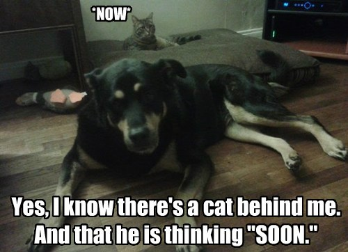 dogs SOON Cats funny - 7678144256