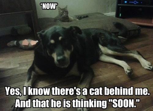 SOON Cats funny - 7678144256