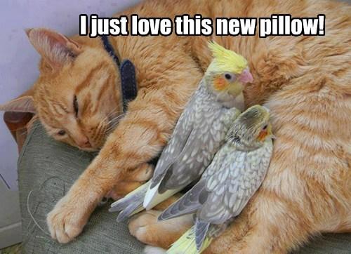 Pillow birds Cats funny - 7678206720