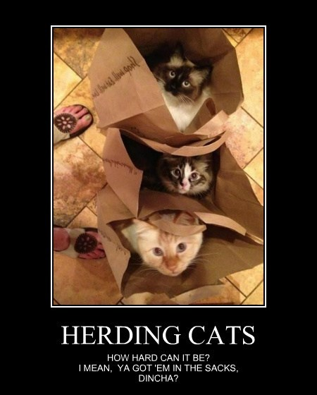 Herding Cats Lolcats Lol Cat Memes Funny Cats Funny Cat Pictures With Words On Them Funny Pictures Lol Cat Memes Lol Cats
