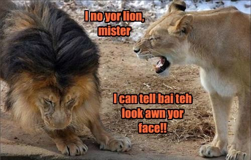 lion funny guilty - 7679104768