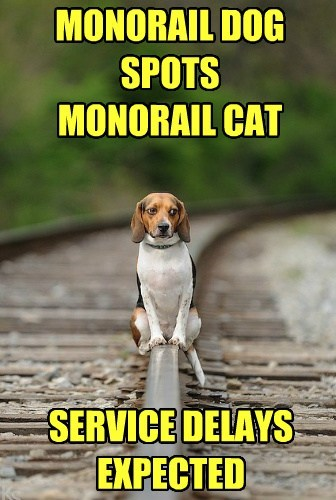 delay monorail cat HoverCat funny