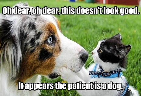 Oh dear, oh dear, this doesn't look good. It appears the patient is a dog.