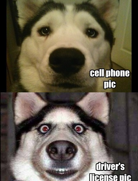 dogs pictures sad but true cameras funny - 7679933952
