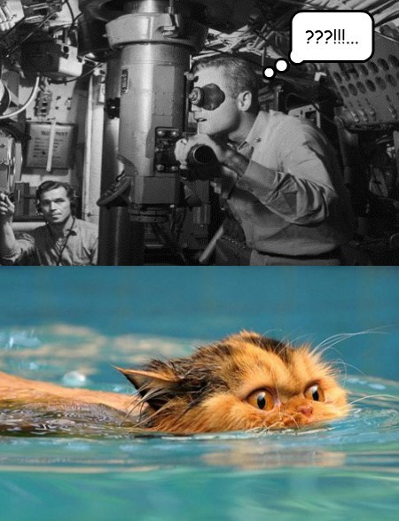 submarines,periscopes,swimming,Cats,funny