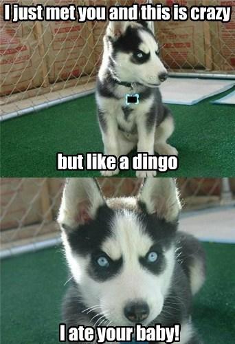 dogs,dingo,evil dogs,funny
