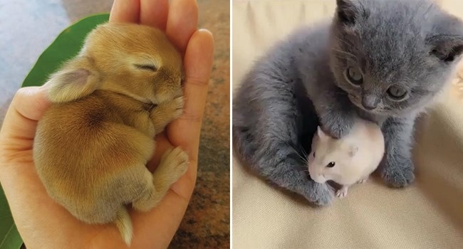 tiny bunny sleeping in a palm and a kitten cuddling with a hamster
