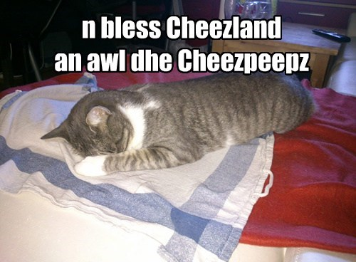 Cheezburger Image 7680746240