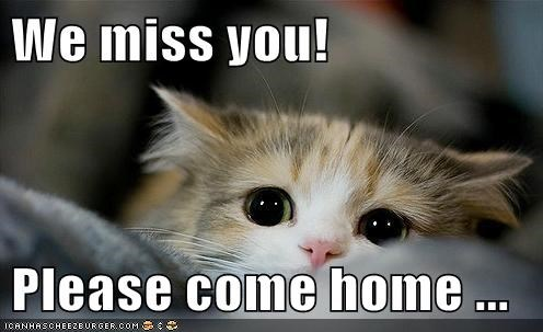 We Miss You Please Come Home Cheezburger Funny Memes