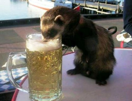 beer crunk critters funny - 7682068736