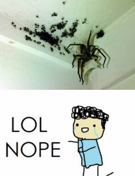 spiders,nope,funny