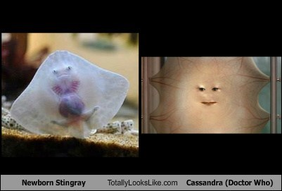 stingrays critters cassandra totally looks like doctor who funny - 7683370496
