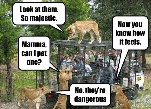 lions zoo humans funny