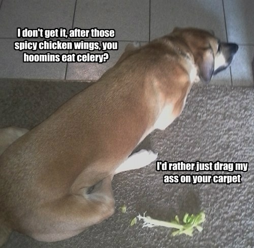 I don't get it, after those spicy chicken wings, you hoomins eat celery? I'd rather just drag my ass on your carpet