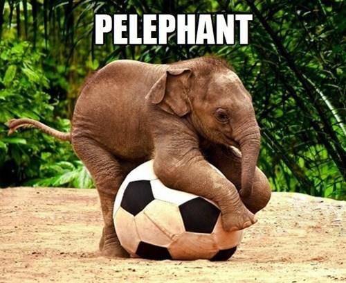 elephant,soccer