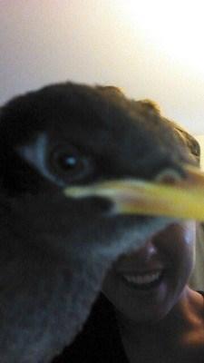 photobomb selfie birds funny - 7683588608