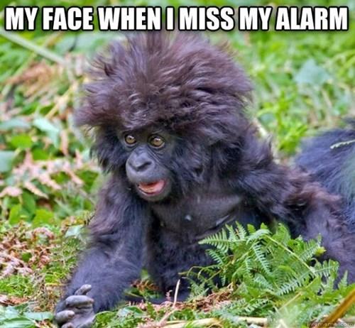 hair baby gorilla gorilla - 7683589888