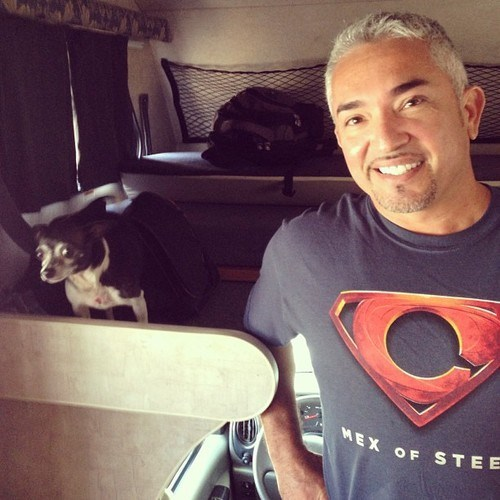 photobomb,dogs,cesar millan,dog whisperer,funny
