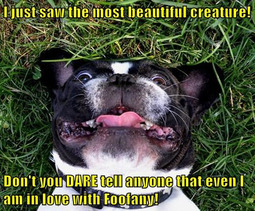 dogs forbidden love Cats funny - 7683690240