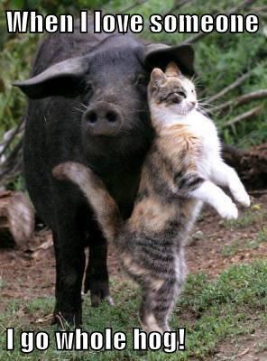 cat pig funny - 7683761664
