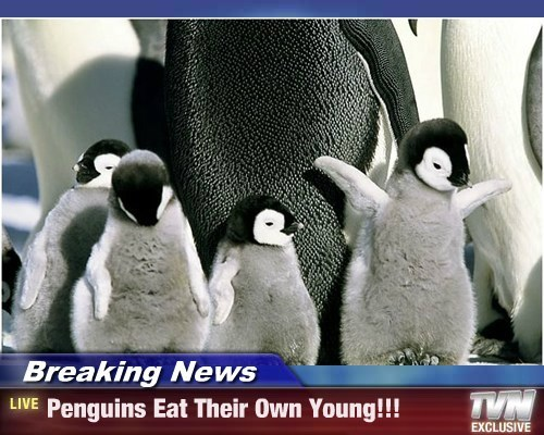 hungry mothers,penguins,baby penguins