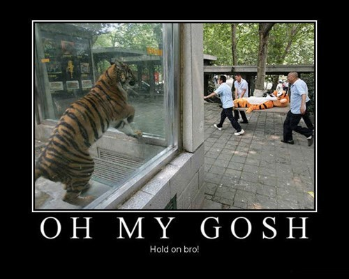 Tigers Are Quite Compassionate