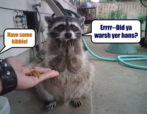 kibble raccoon fud funny - 7683991296