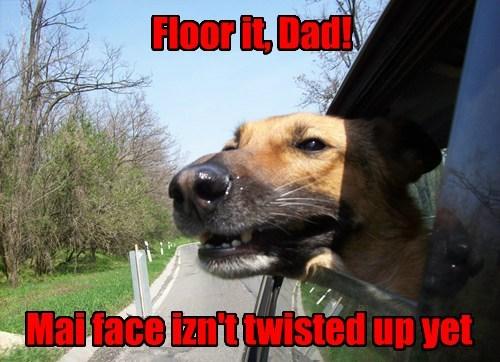 car window fun funny - 7684281088