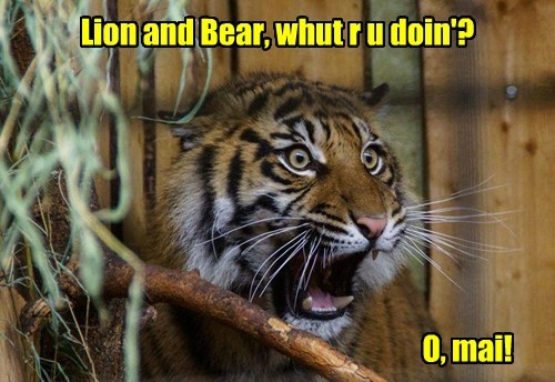 lions,tigers,bears,Dorothy,funny